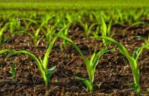 معافیت مالیاتی شرکتهای کشاورزی ( معافیت ماده 81 )
